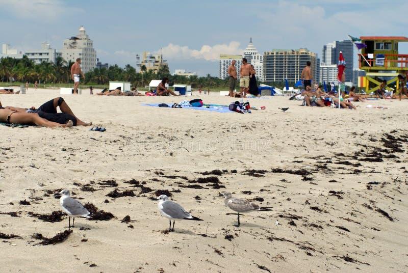 南海滩的江边在迈阿密 免版税库存图片