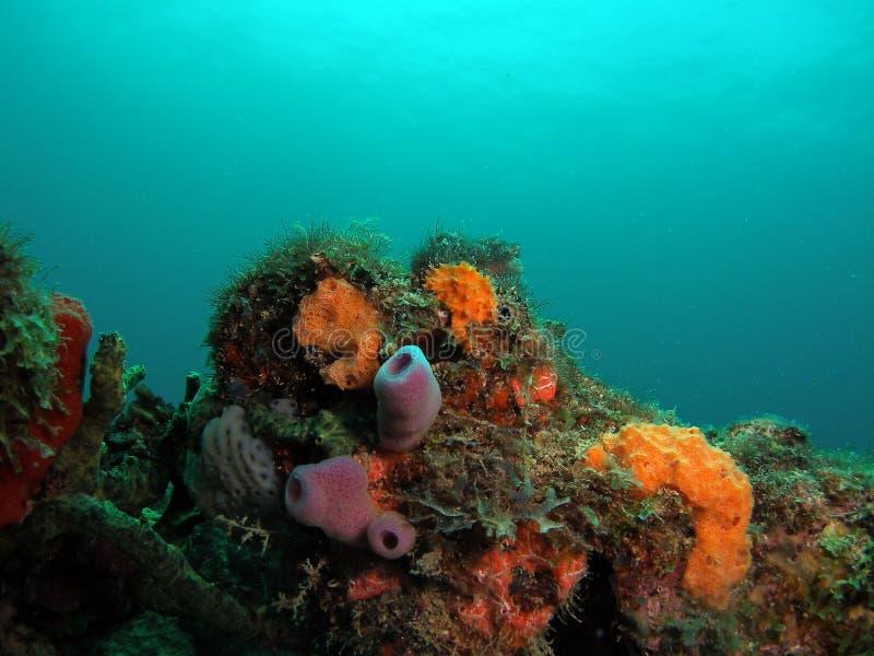 南珊瑚佛罗里达的礁石 库存图片