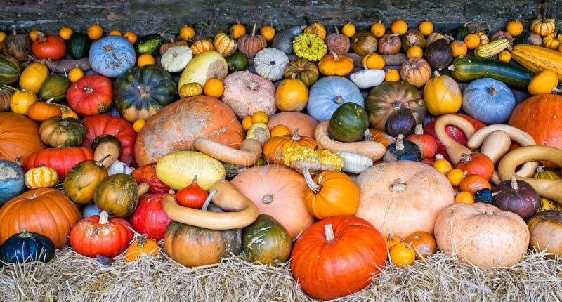 南瓜、南瓜和金瓜的五颜六色的分类 免版税库存图片