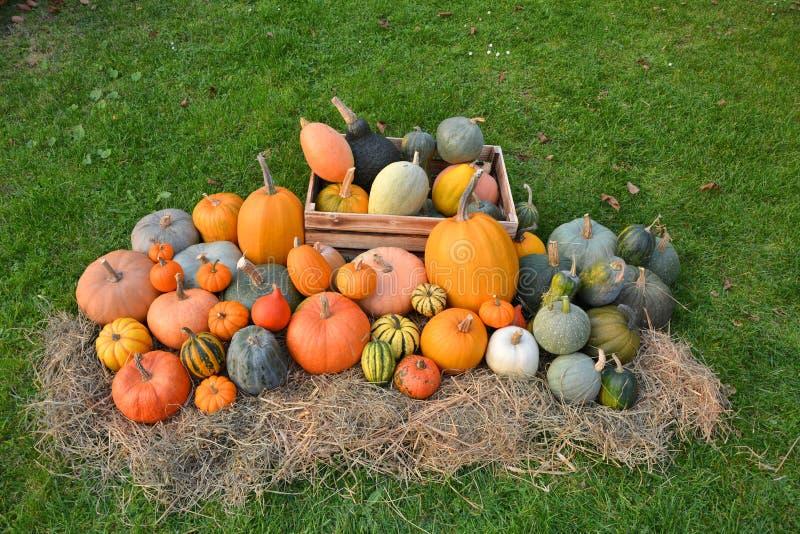 南瓜和南瓜不同的品种在秸杆 免版税库存照片