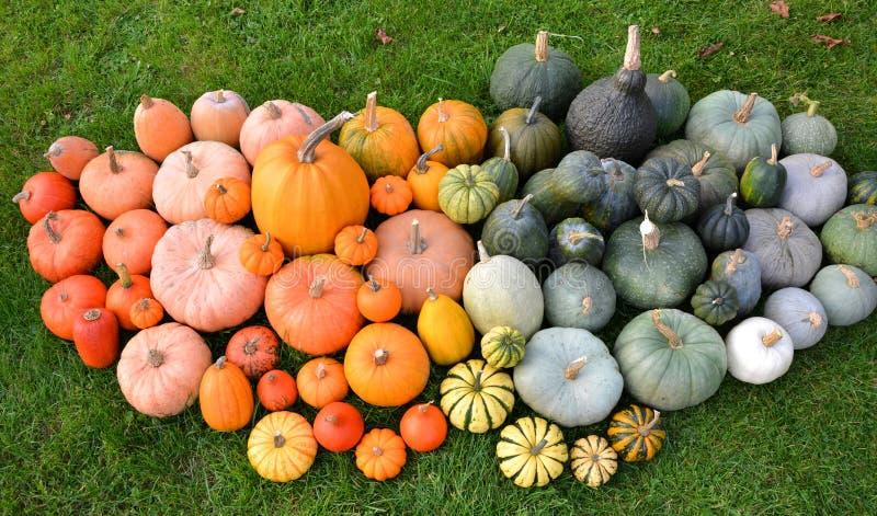 南瓜和南瓜不同的品种在草 免版税库存照片