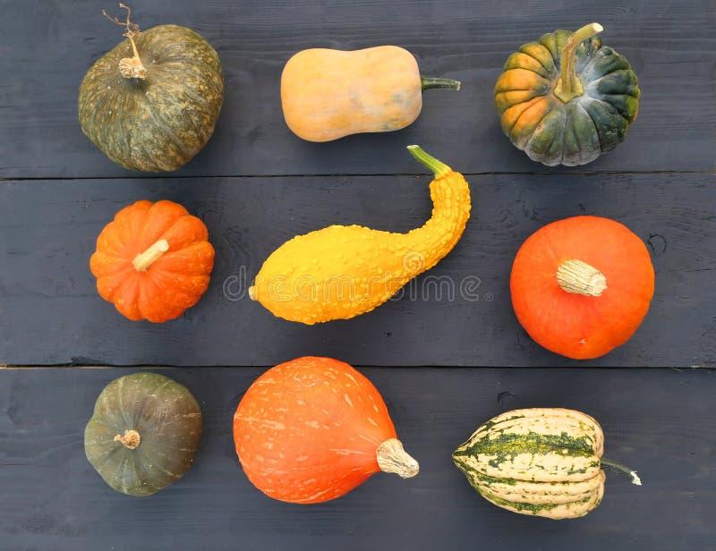 南瓜和南瓜不同的品种  免版税库存图片