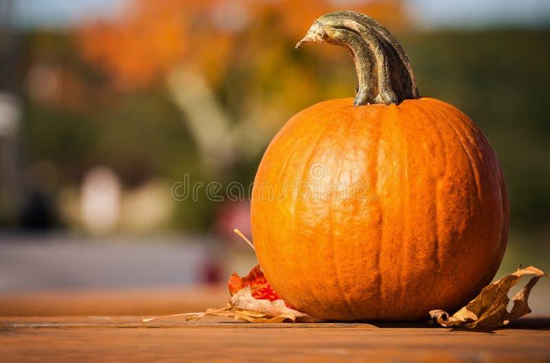 南瓜和秋叶在野餐桌上反对秋叶 库存照片
