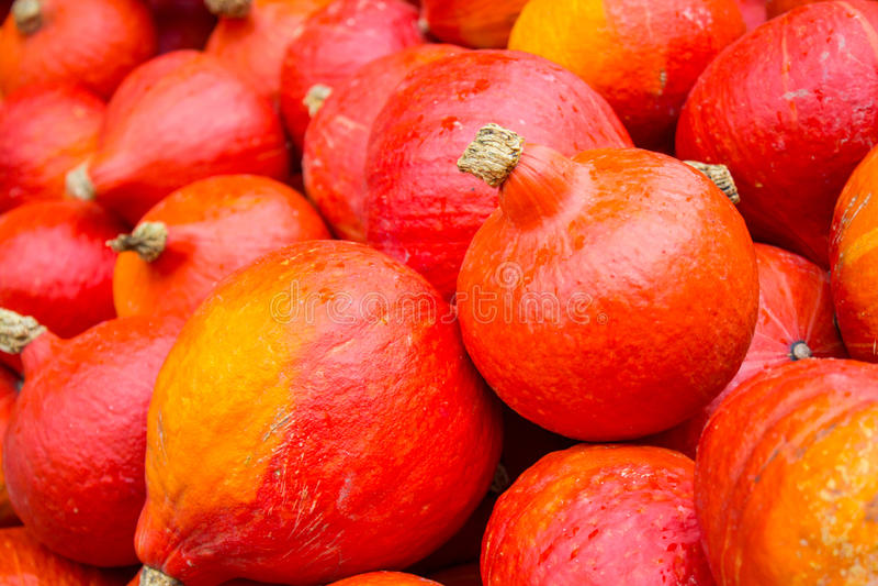 南瓜收获在秋天 免版税库存图片