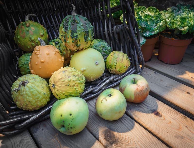 南瓜的异常的类型在篮子的在一个木柜台 绿色南瓜和苹果在一张木桌上 南瓜一个假日 免版税图库摄影