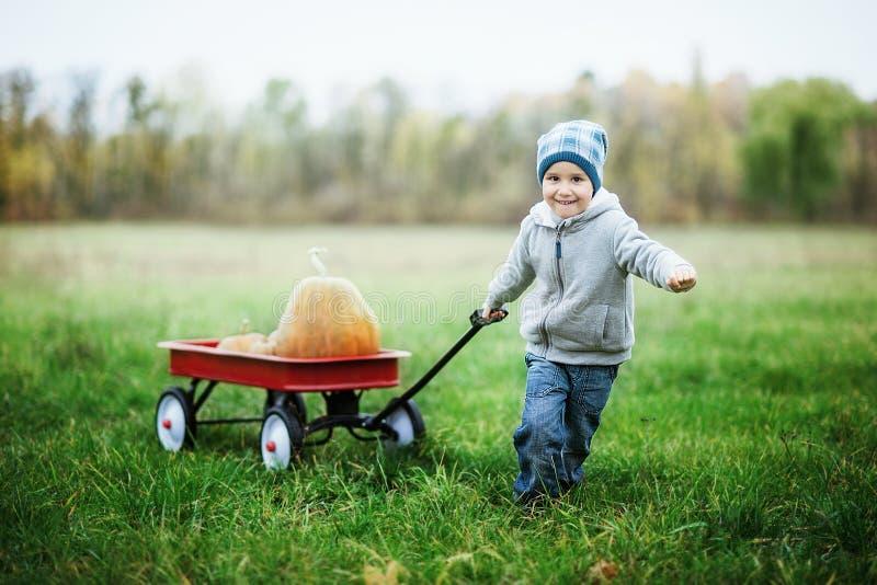 南瓜补丁的愉快的矮小的小孩男孩在冷的秋天天,用万圣夜或感恩的很多南瓜 库存照片
