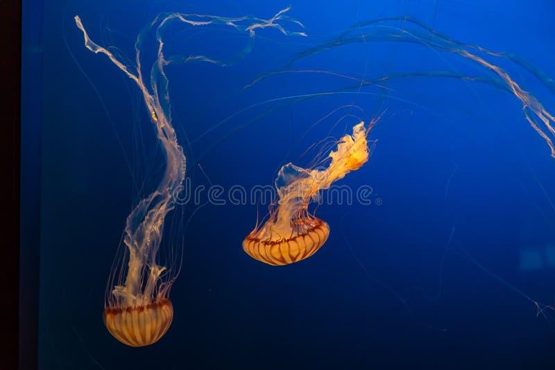 南美海荨麻在奥马哈亨利杜尔利动物园里 库存照片