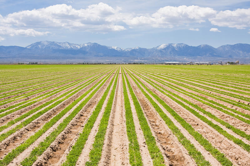 南部加利福尼亚的农场 免版税库存照片