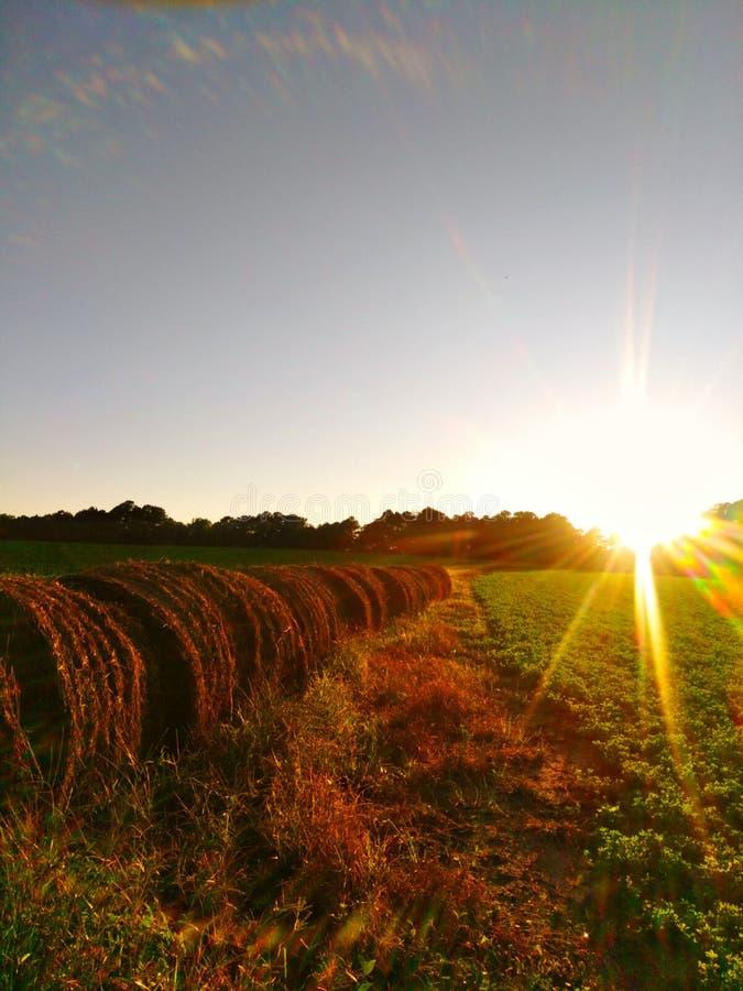 南部的夏天 免版税图库摄影