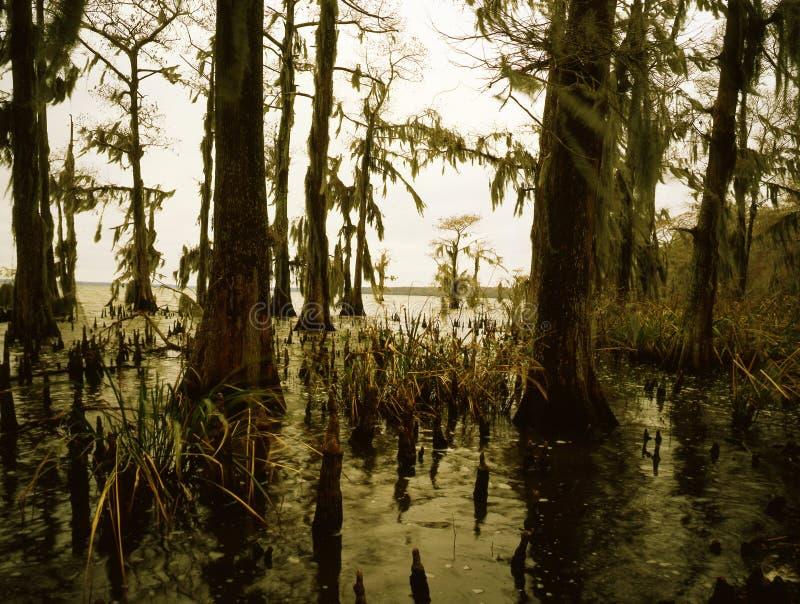 南部的多沼泽的支流 库存照片