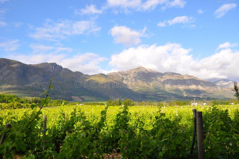 南非winelands 免版税库存照片