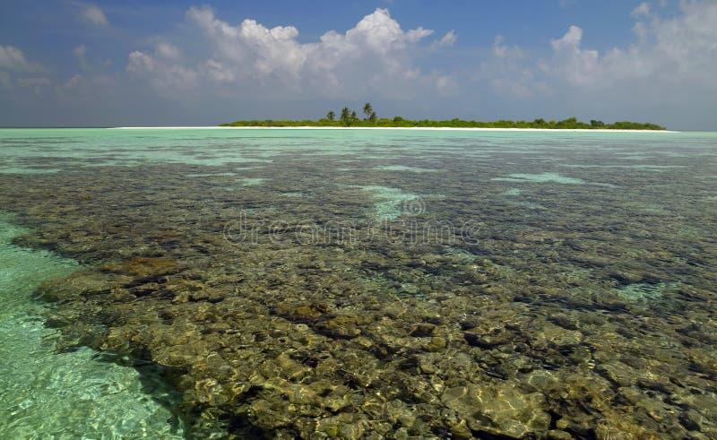 南ari环礁珊瑚马尔代夫的礁石 免版税库存图片