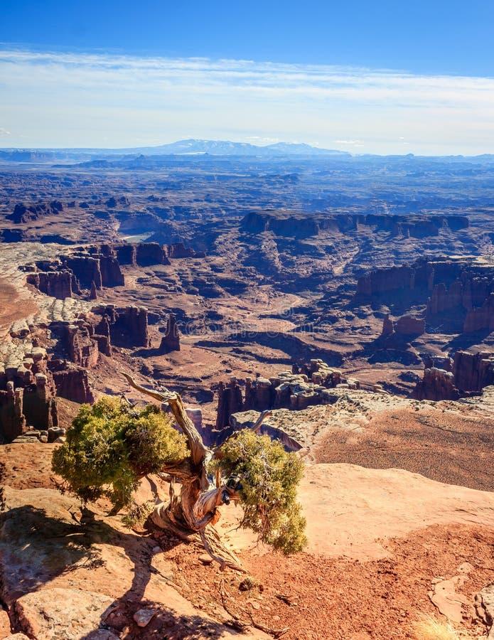 南Canyonlands的视图 库存照片