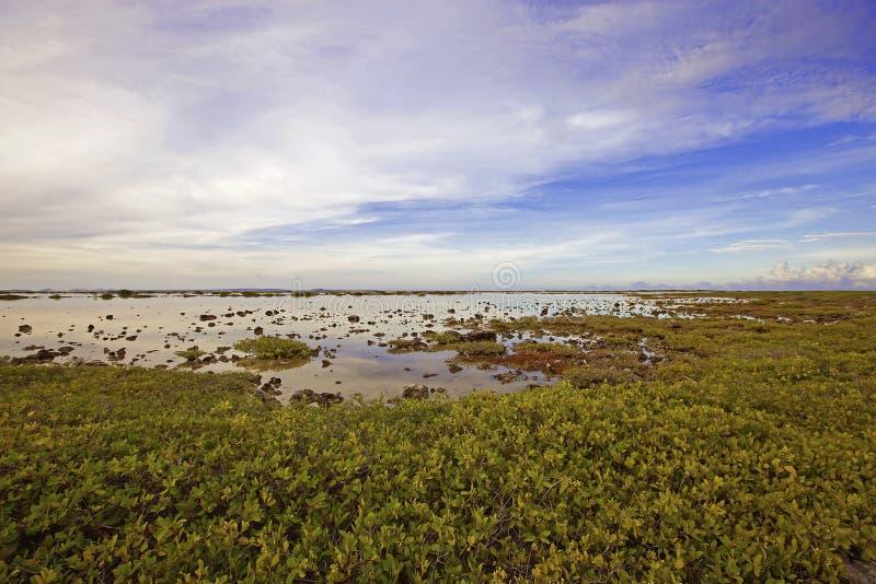 博内尔岛湖 免版税库存图片