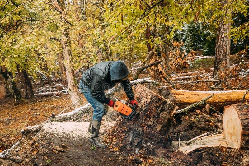 博尔若米,乔治亚 人锯切树在有锯的森林里 免版税库存照片