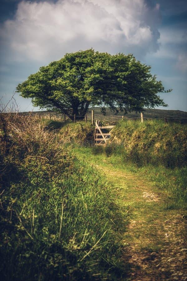 博德明停泊康沃尔郡英国英国 图库摄影