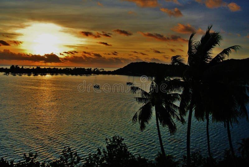 博拉博拉岛,与棕榈的热带日落 库存图片
