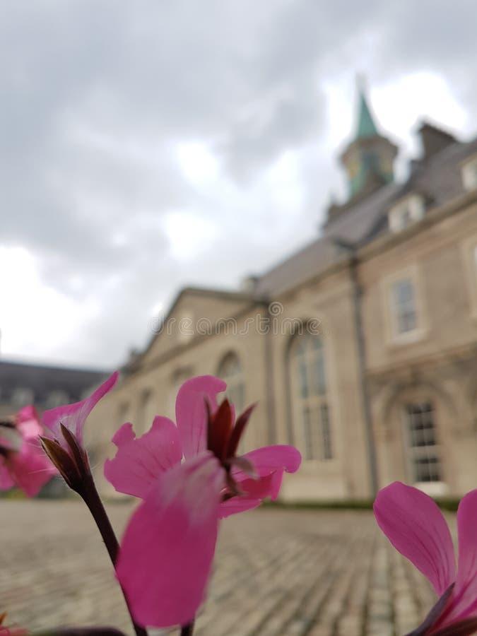 博物馆艺术Edimburgo花的 库存照片