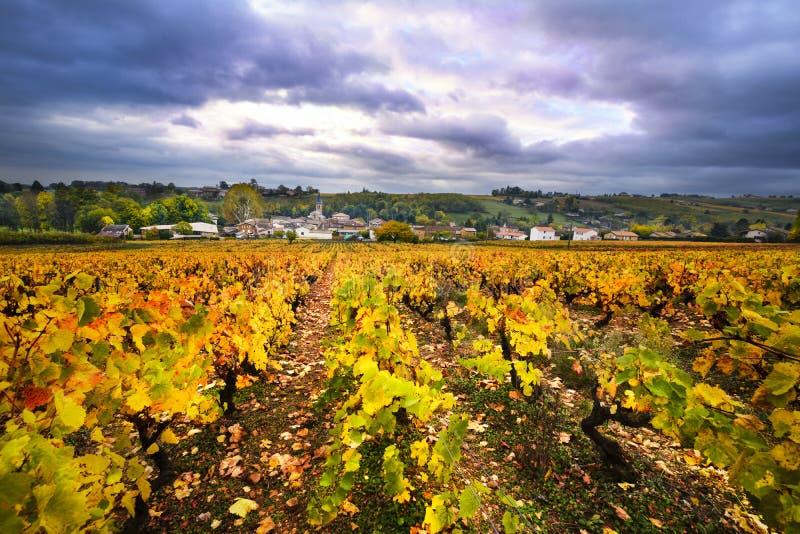 博若莱红葡萄酒和葡萄园村庄在秋季期间 图库摄影