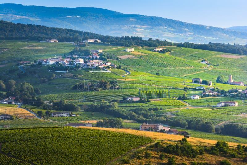 博若莱红葡萄酒土地典型的村庄有他的葡萄园的,法国 库存照片