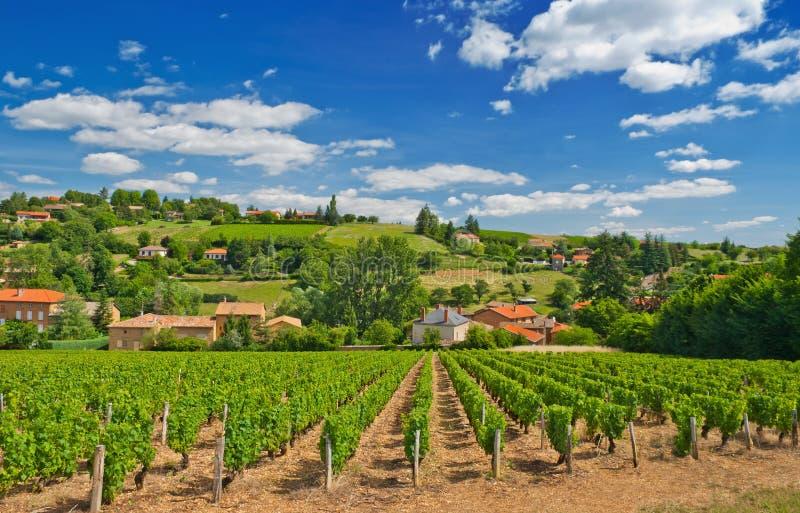博若莱红葡萄酒法国地区葡萄园 免版税库存照片