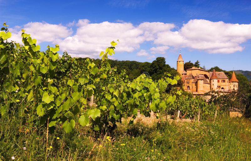 博若莱红葡萄酒葡萄园 免版税库存图片