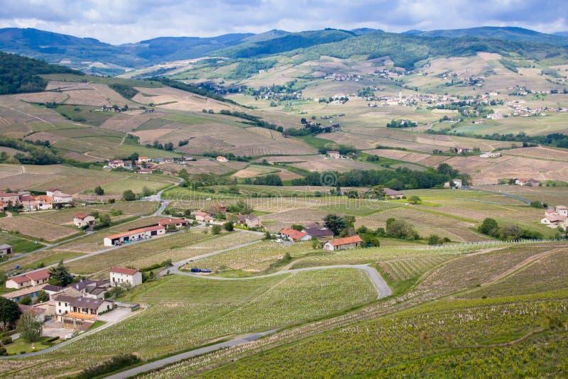 博若莱红葡萄酒酒区域的美好的全景和美丽如画的看法和春天的开花的葡萄园 免版税库存照片
