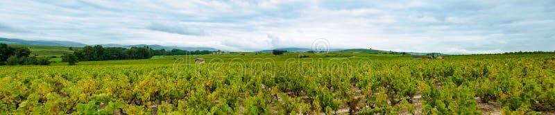 博若莱红葡萄酒风景的全景,法国 免版税库存照片