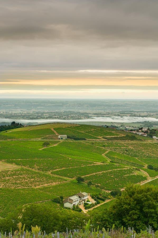 博若莱红葡萄酒,法国葡萄园  免版税库存照片