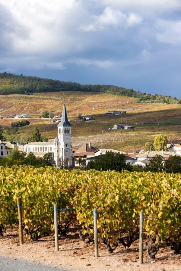 博若莱红葡萄酒,罗讷Alpes,法国 库存图片