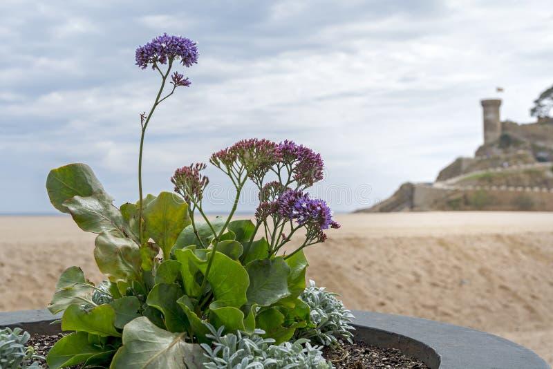 卡塔龙尼亚海风景托萨德马尔在西班牙 库存照片