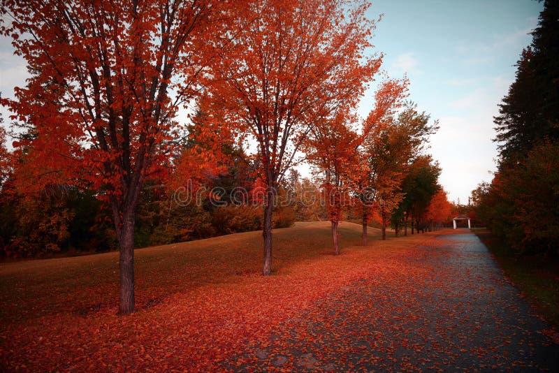 卡尔加里,加拿大美好的秋天或秋天风景  库存图片