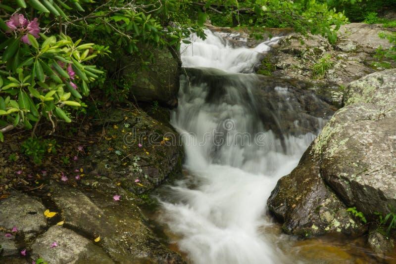 卡托巴人杜鹃花和落下的瀑布在Fallingwater小河 库存照片