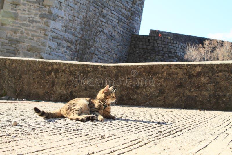 卡斯特洛圣乔瓦尼城堡上的塔比猫 库存照片