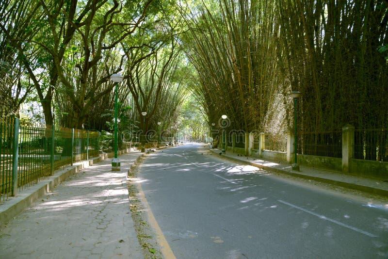 卡本公园, Bengaluru (班格洛) 免版税库存图片