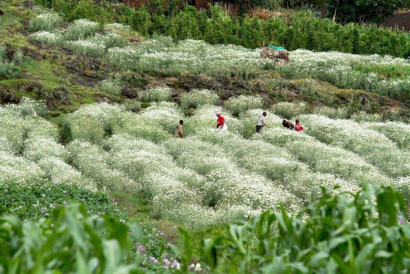 卢旺达 库存图片