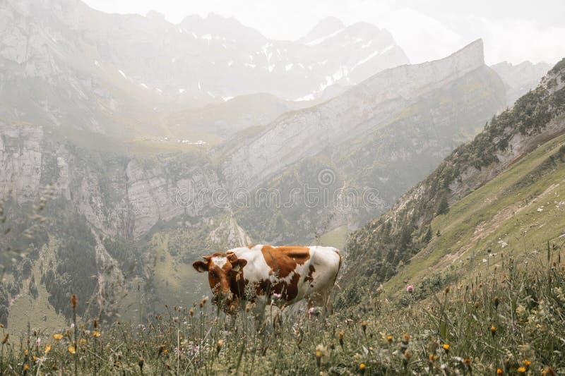 卢达本纳,瑞士-欧洲 库存图片