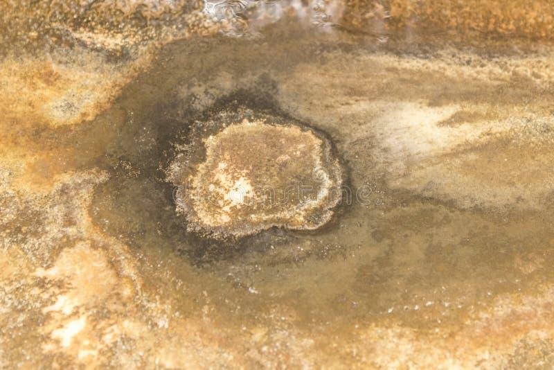 卫生间真菌 免版税库存照片