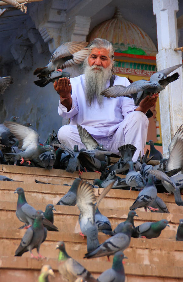 印地安人哺养的鸽子临近圣洁湖,普斯赫卡尔,印度 免版税库存照片