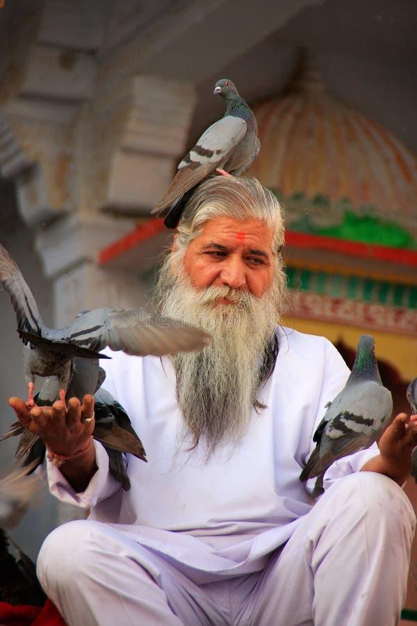 印地安人哺养的鸽子临近圣洁湖,普斯赫卡尔,印度 免版税库存图片