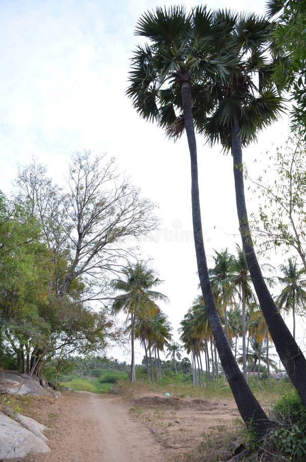 印地安农场 库存图片