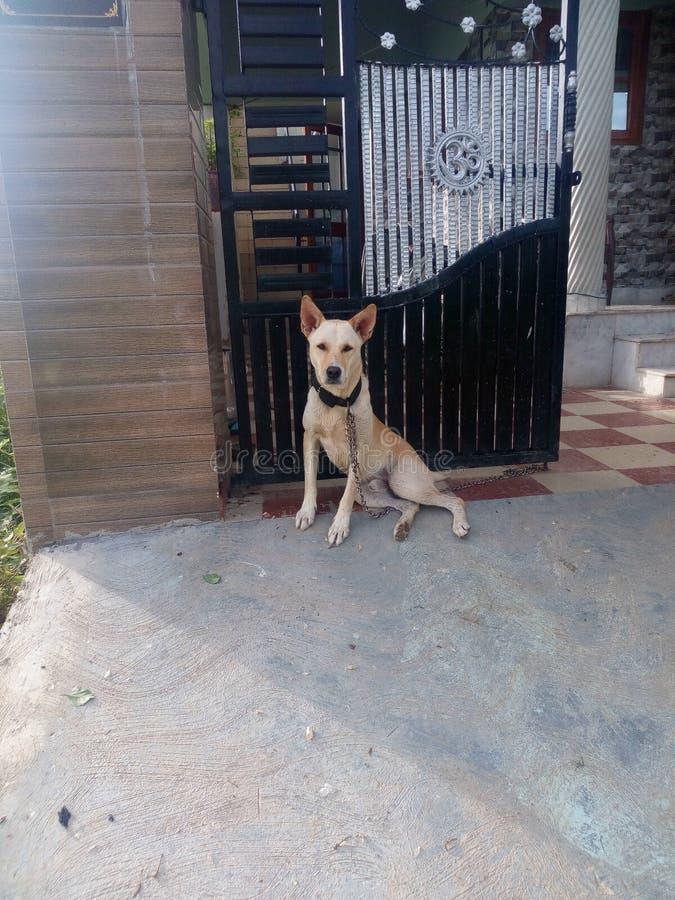 印地安宠物 图库摄影