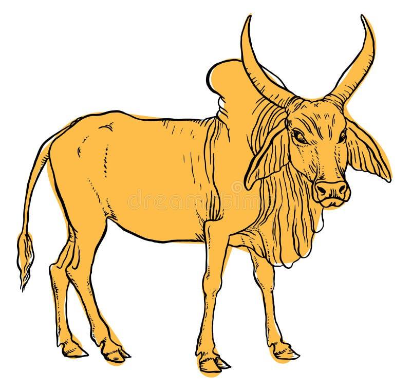印地安封牛母牛 向量例证