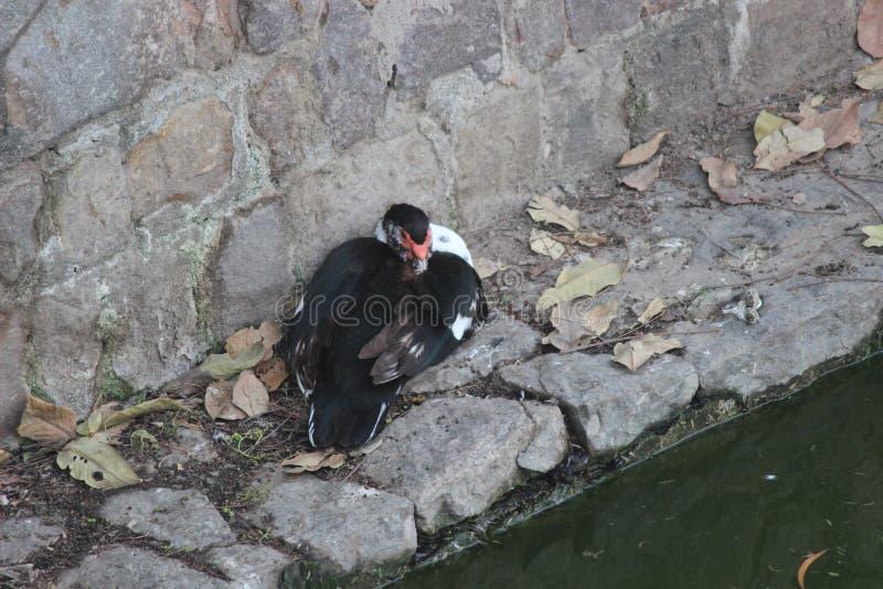 印地安自然 库存图片