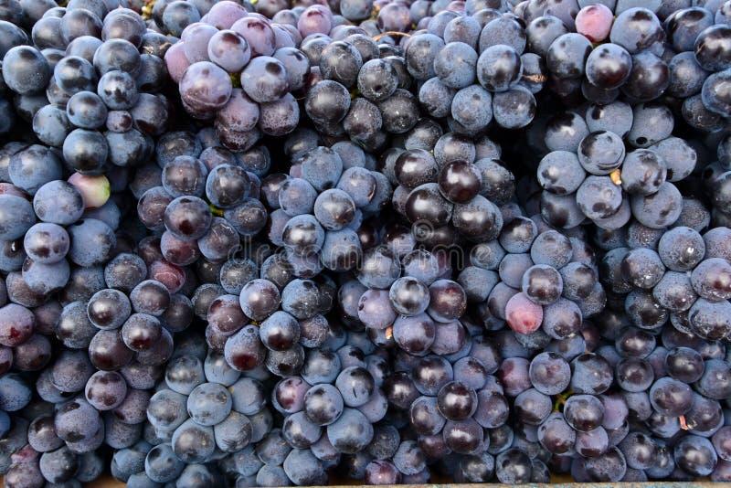 印地安黑葡萄 库存图片