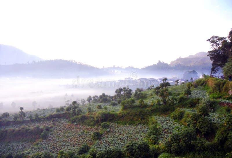 印尼爪哇中部的迪昂高原原苏泊,晨雾笼罩着农田。印尼中爪哇地原苏波高地地表晨雾的自然现象 免版税图库摄影