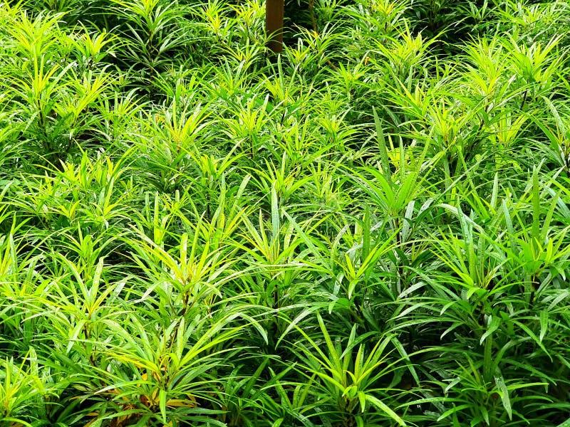 印尼雅加达南区Unindra PGRI校园中的凉爽绿色公园 库存图片