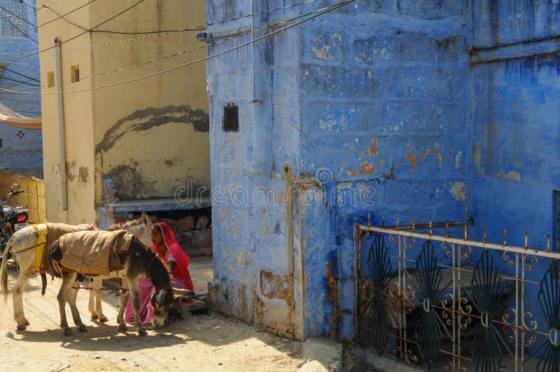 印度女人带着驴在焦特布尔 库存照片