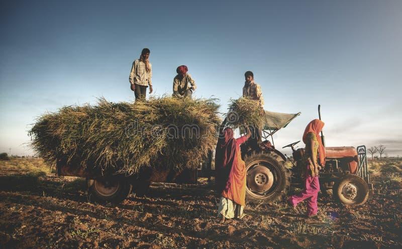 印度家庭收获庄稼的Faeming收获概念 免版税图库摄影