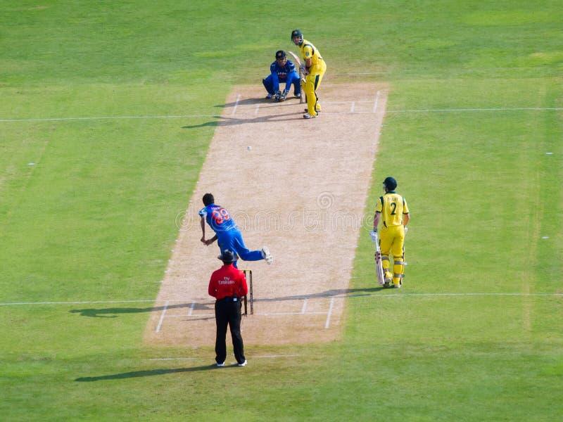 印度对澳大利亚蟋蟀 库存照片